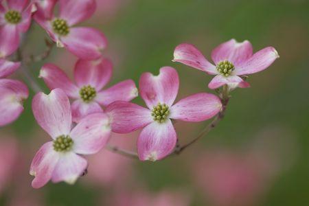 층층 나무 꽃을 피 웁니다 스톡 콘텐츠