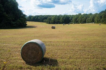 Newly Rolled Hay Bales in an Open Field Stok Fotoğraf