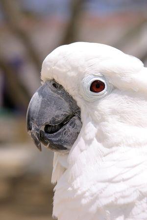 White Parrot headshots