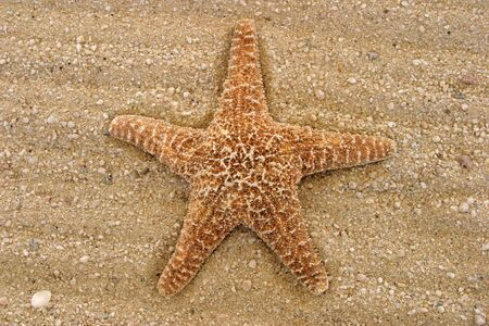 star fish on the sand