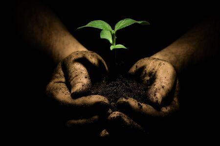 De handen van een boer die de vorming van nieuwe planten