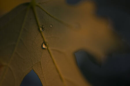 Water drop formed on an autumn leaf