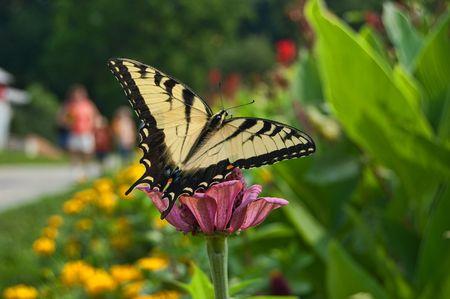 monarch butterfly landing on flower photo