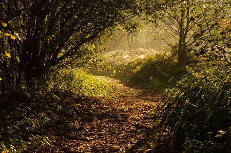 bury: Morning trail Stock Photo
