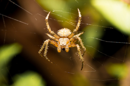 yellow spider photo