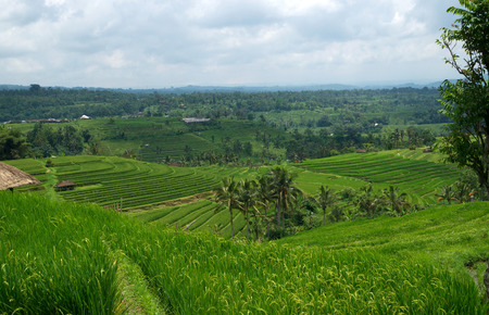 Jatileuwih green terraced rice fields panorama view underneath cloudy sky in Bali, Indonesia. Stock Photo