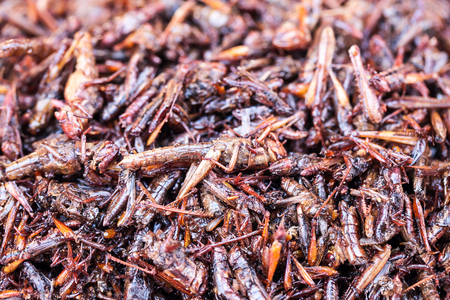 grasshoppers: Fried grasshoppers