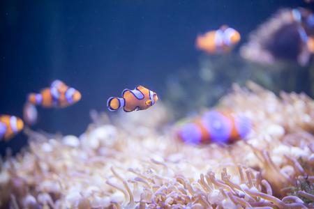 Cartoon fish near sea anemone Stock Photo