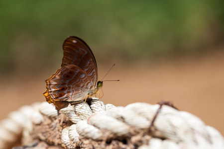 Beautiful butterfly on white rope Stockfoto