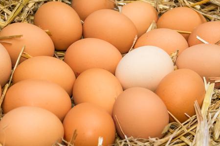 Freerange fresca huevos crudos en cartón de huevo de papel reciclado o en la paja