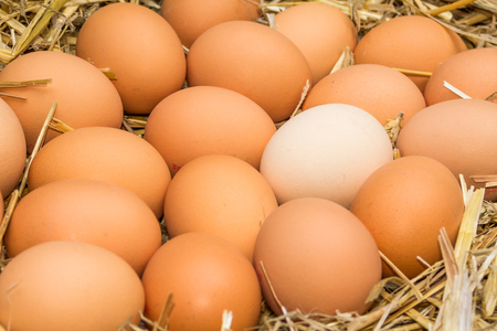 saturated: Freerange fresh raw eggs in recycled paper egg cartons or on the straw Stock Photo