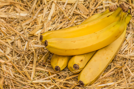 fairtrade: Organic bananas latin � musa, a product of eco agriculture�are important part of not only vegans and vegetarians diet but are healthy for all people containing�vitamin B-6, manganese, vitamin C, copper, fiber, potassium. Banana fruits on natural straw b