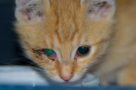 Ginger kitten with conjunctivitis