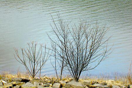 albero secco: albero morto o un albero vicino a secco nel serbatoio