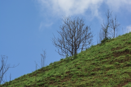 Beautiful summer dead tree on the mountain of grass photo
