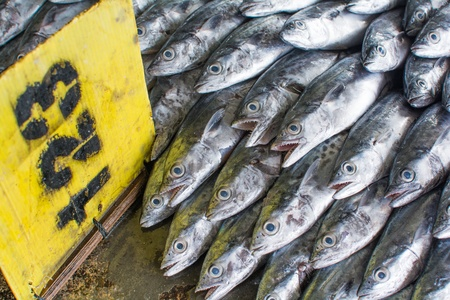 fishy: A group of fish that ready to Wholesale in fish market in Thailand
