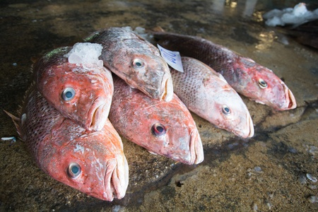 Close up of fish on display in a fish market photo