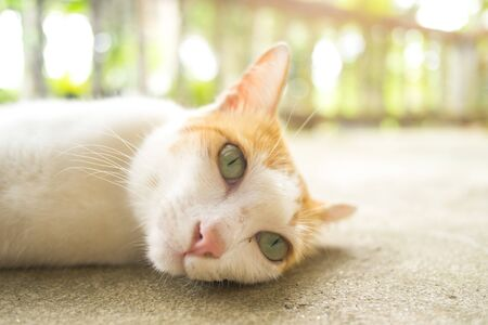 Cat laydown on cement floor, selective focus Stok Fotoğraf