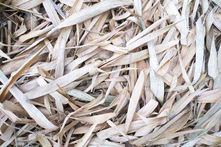 Dry bamboo leaf onground closeup