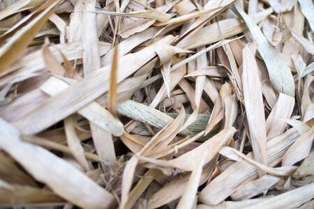 Dry bamboo leaf onground closeup, selective focus