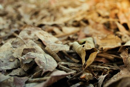 Close up of dry leaf on the ground textures background, selective focus