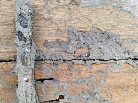 Termites damage on wood wall background