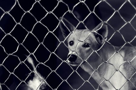 Unhappy Stray dog in a cage, Homeless animal in Shelter center