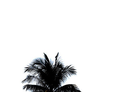 cancun: Coconut trees silhouette