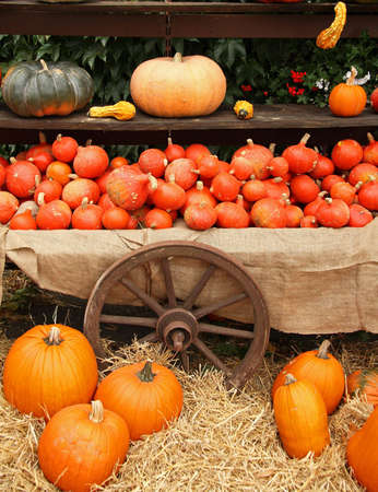 Pumpkins on bavarian market Stock Photo - 6217576