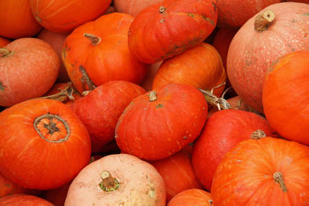 cucurbit: Pumpkins on bavarian market