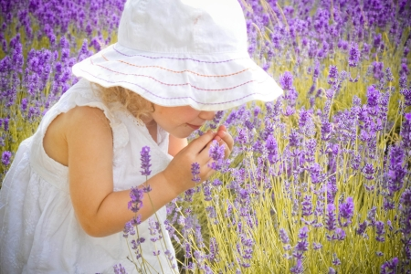 lavender flowers: Girl in white dress is smelling the lavender