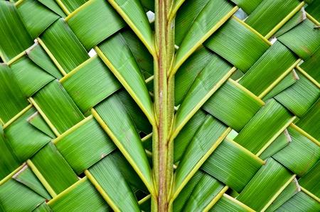 woven surface: Tejiendo hojas de coco textura