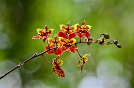 Red orchid with green background photo