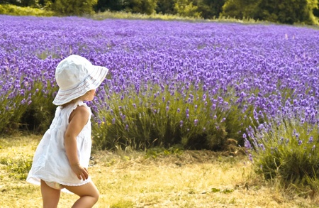 Girl in a white dress going away in a field of lavender photo