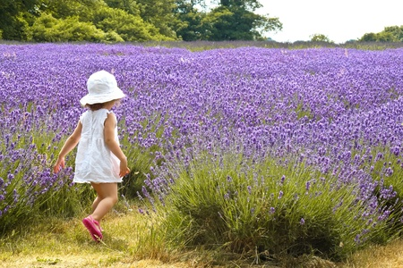 Girl in a white dress going away in a field of lavender