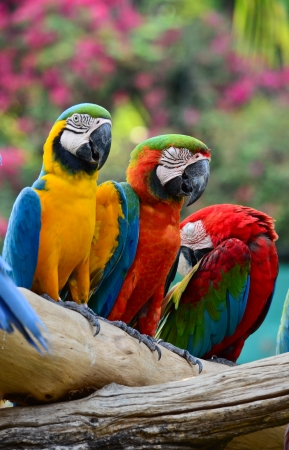 Colorful macaw resting on branches of tree photo