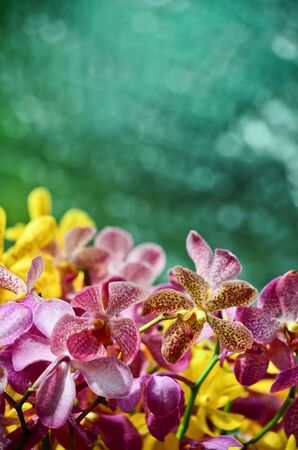Colorful orchid with water background photo