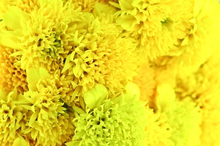 Close up yellow flower bouquet photo