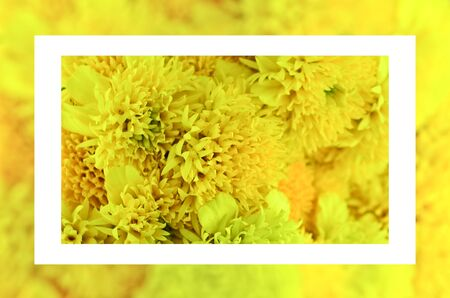 Close up yellow flower bouquet frame photo