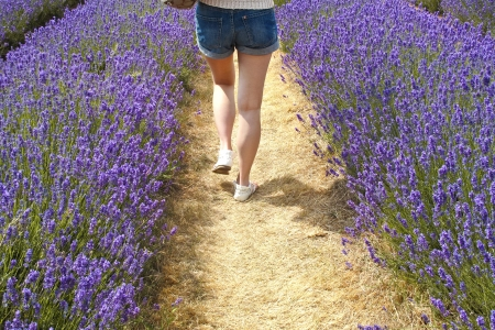 Girl walking away in a field of lavender photo
