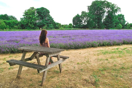 Girl sitting  on the bench in lavender field photo