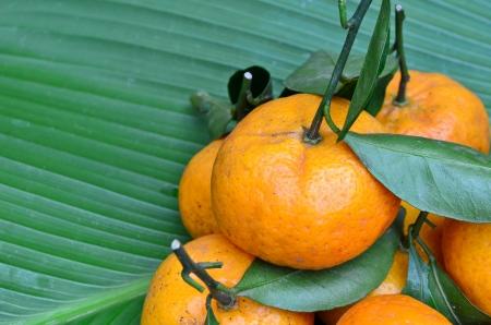 Oranges on green leaf
