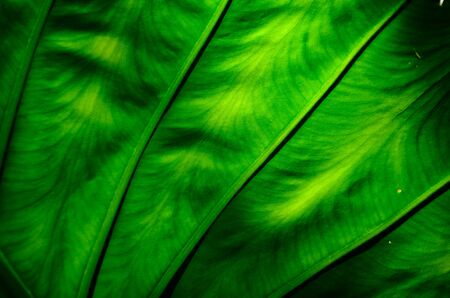 Green leaf background texture photo