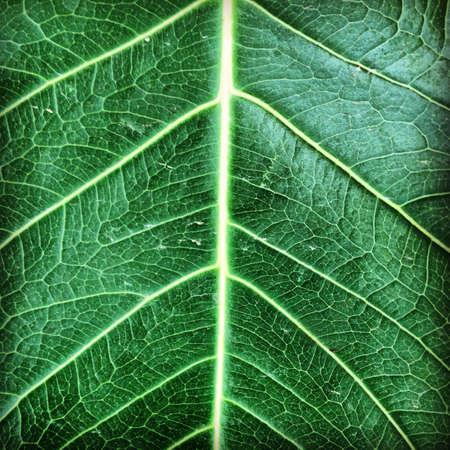 closeup: Closeup green leaf texture