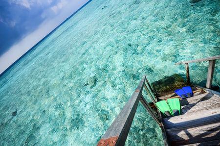 flippers: Aletas de goma en el mar