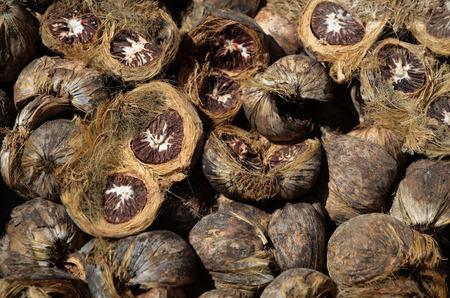 betelnut: Dry betel nut Stock Photo