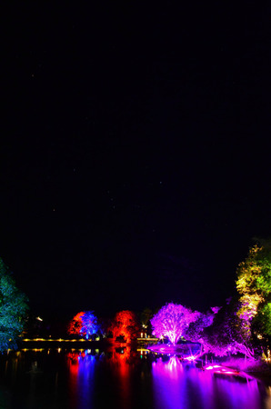 colorful tree: Colorful tree in the dark