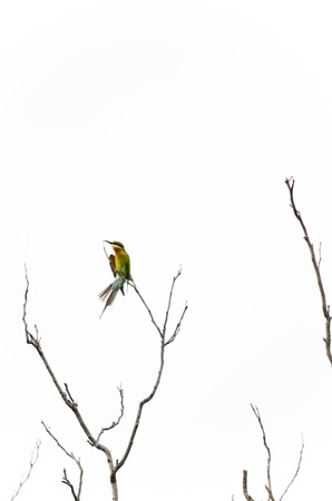 dry: Bird on the dry tree