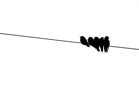birds on a wire: Birds on the electricity wire