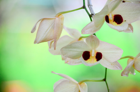 yellow orchid: Yellow orchid